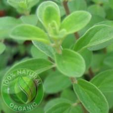 Marjoram Essential Oil Organic