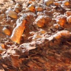 Myrrh Essential Oil (India)