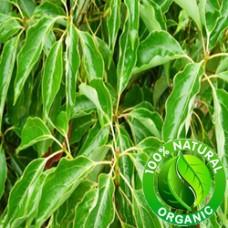 Ravensara Essential Oil Organic