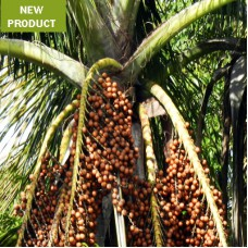 Buriti Oil Virgin