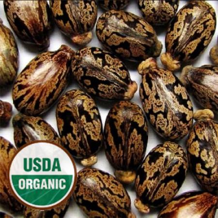 Castor Seed Oil ORGANIC