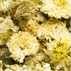CHRYSANTHEMUM FLOWER WHOLE