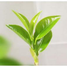 Green Tea Floral Water