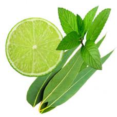 Mint And Eucalyptus Fragrance Oil