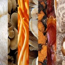 7-Mushrooms Extract