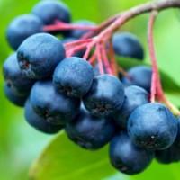Acai Berry Seed Oil