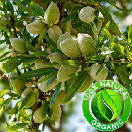 Almond Sweet Oil ORGANIC