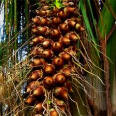 Babassu Oil Organic