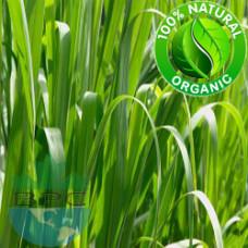 Palmarosa Essential Oil Organic