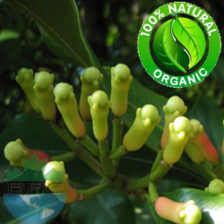 Clove Bud Essential Oil Organic (Syzygium Aromaticum L)