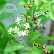 Henna Oil Organic