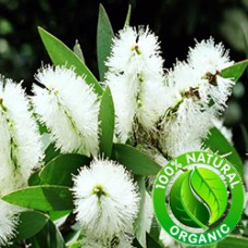 Niaouli Essential Oil Organic