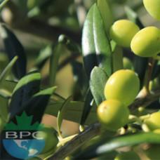 Olive Oil Pomace Grade
