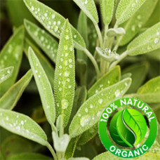 Sage Essential Oil Organic