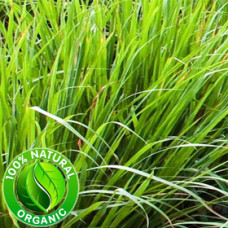 Vetiver Essential Oil ORGANIC
