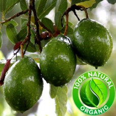 Avocado Virgin Oil ORGANIC