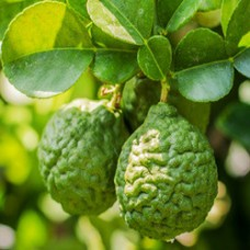 Bergamot Essential Oil (Italy)