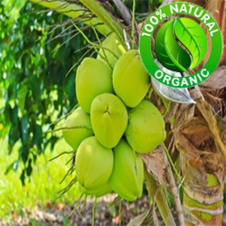 Coconut Oil Virgin ORGANIC