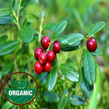 Cranberry Seed Oil Virgin Organic