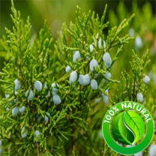 Juniper Berry Oil (Slovenia) ORGANIC
