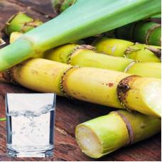 Sugarcane Extract
