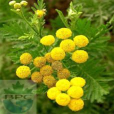 Tansy Blue Herbal Oil