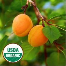 Apricot Kernel Oil Virgin Organic