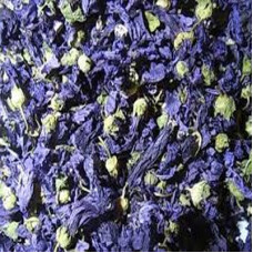 MALVA FLOWER BLUE WHOLE