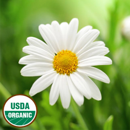 Chamomile Essential Oil German (Nepal) ORGANIC