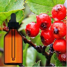 Hawthorn Berry Liquid Extract