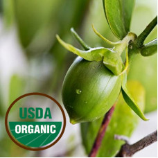 Jojoba Golden Oil ORGANIC