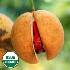 Nutmeg Essential Oil Organic