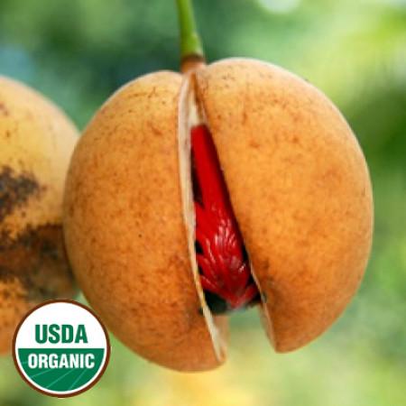 Nutmeg Essential Oil Organic