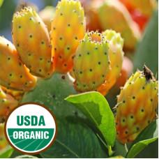 Prickly Pear Seed Oil Virgin ORGANIC