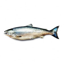 Wild Salmon Fish Oil