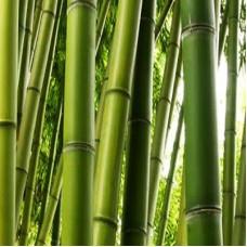 Bamboo Extract Cosmetic