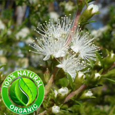 Tea Tree Lemon Essential OIl (Australia)