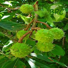 Horse chestnut oil (Canada)