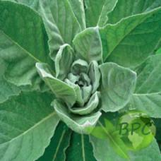 Mullein leaf oil (Canada)