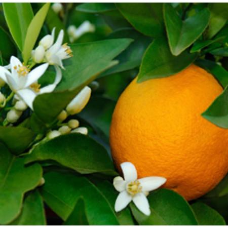 Orange Flower Absolute 5%