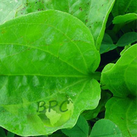 Plantain leaf oil (Canada)