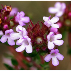 Thyme Red Floral Water