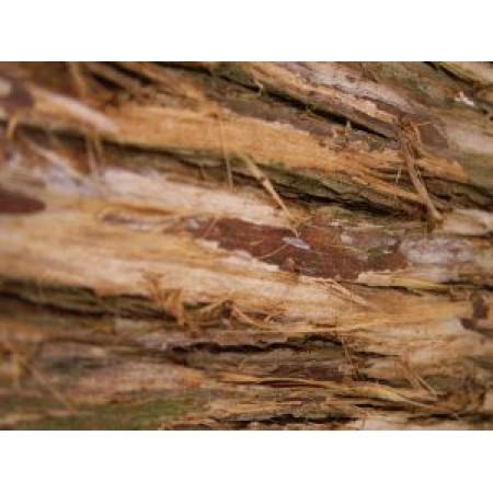 CEDAR TREE BARK (DEVDARU) C/S