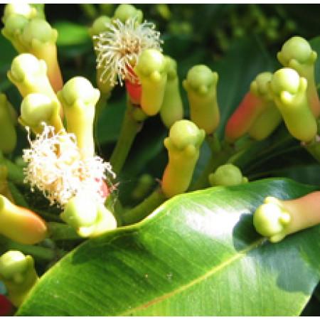 Clove Essential Oil (Madagascar)