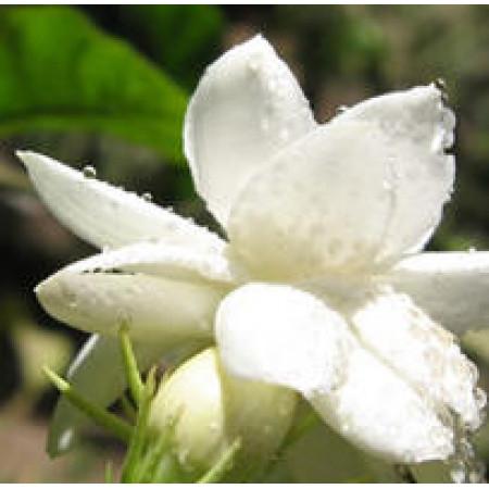 Linan Spray Jasmine
