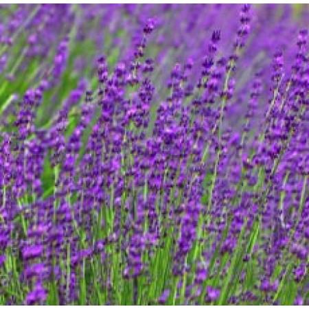 Linen Spray Lavender