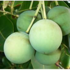 Macadamia Nut Oil (AUSTRALIA)
