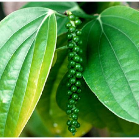 Black Pepper Essential Oil (India)