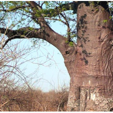 Rosewood Natural Essential Oil